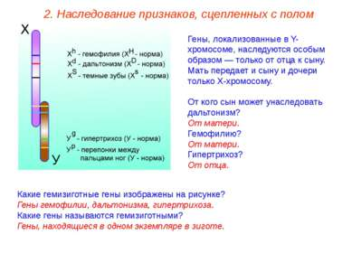 Гены, локализованные в Y-хромосоме, наследуются особым образом — только от от...
