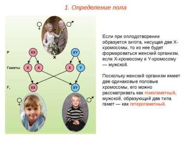 Если при оплодотворении образуется зигота, несущая две Х-хромосомы, то из нее...