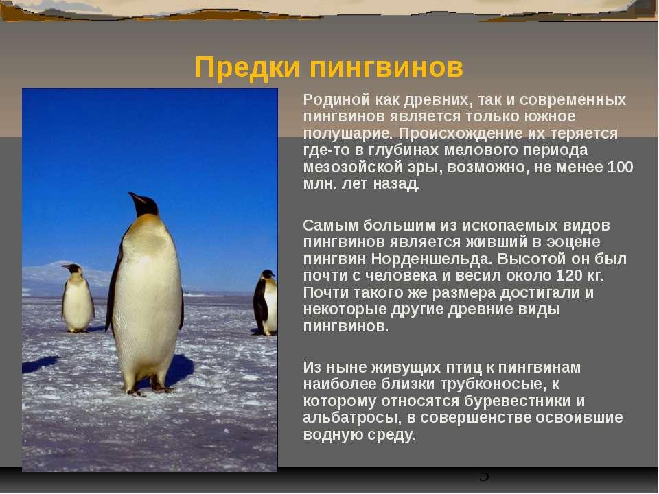Родиной как древних, так и современных пингвинов является только южное полуша...