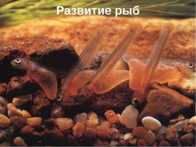 Развитие рыб