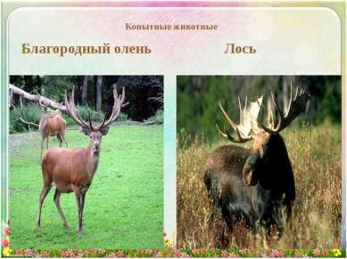 Копытные животные Благородный олень Лось