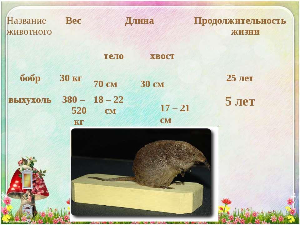 17 – 21 см Название животного Вес Длина Продолжительность жизни бобр 30 кг те...