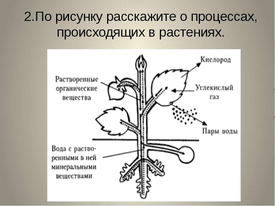 2.По рисунку расскажите о процессах, происходящих в растениях.