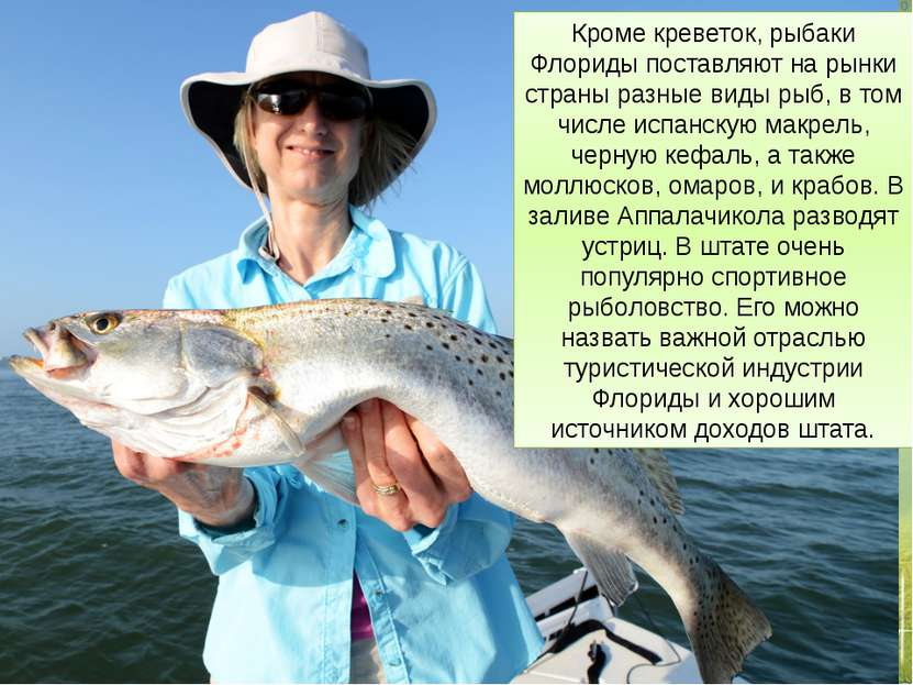 Кроме креветок, рыбаки Флориды поставляют на рынки страны разные виды рыб, в ...