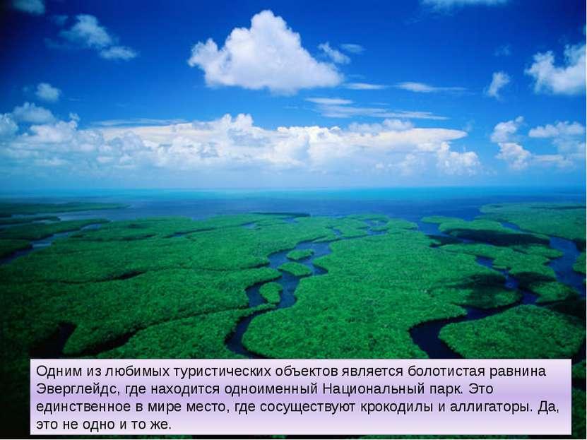 Одним из любимых туристических объектов является болотистая равнина Эверглейд...