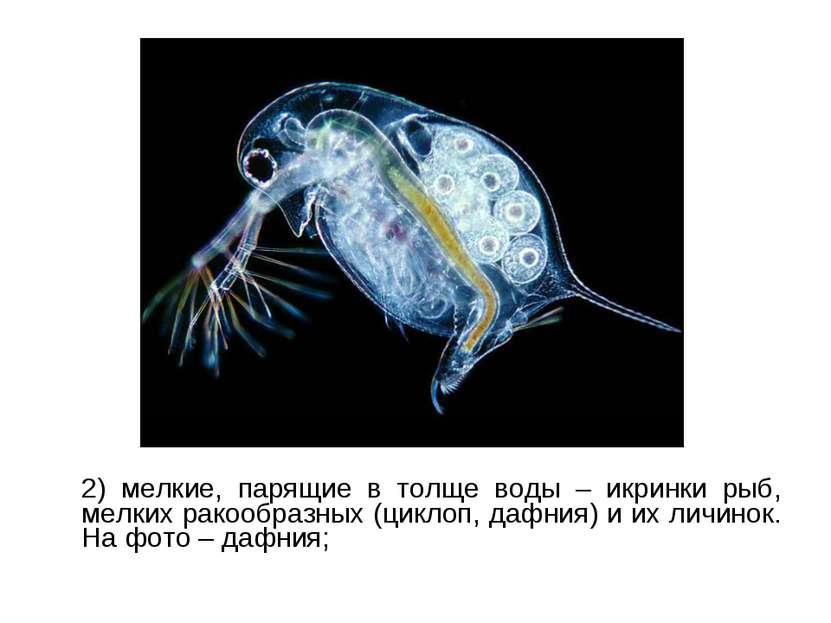 2) мелкие, парящие в толще воды – икринки рыб, мелких ракообразных (циклоп, д...