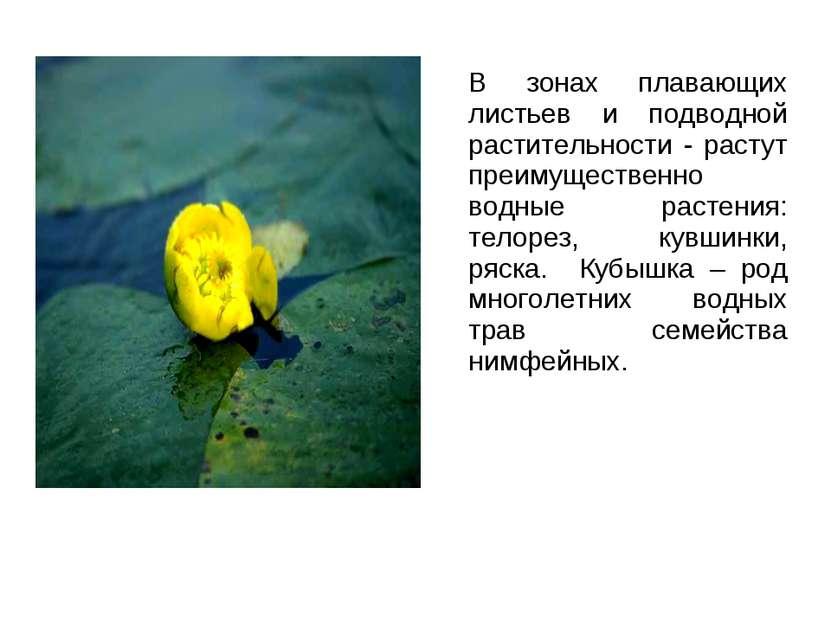 В зонах плавающих листьев и подводной растительности - растут преимущественно...