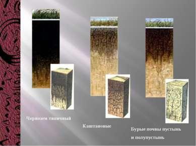 Чернозем типичный Каштановые Бурые почвы пустынь и полупустынь
