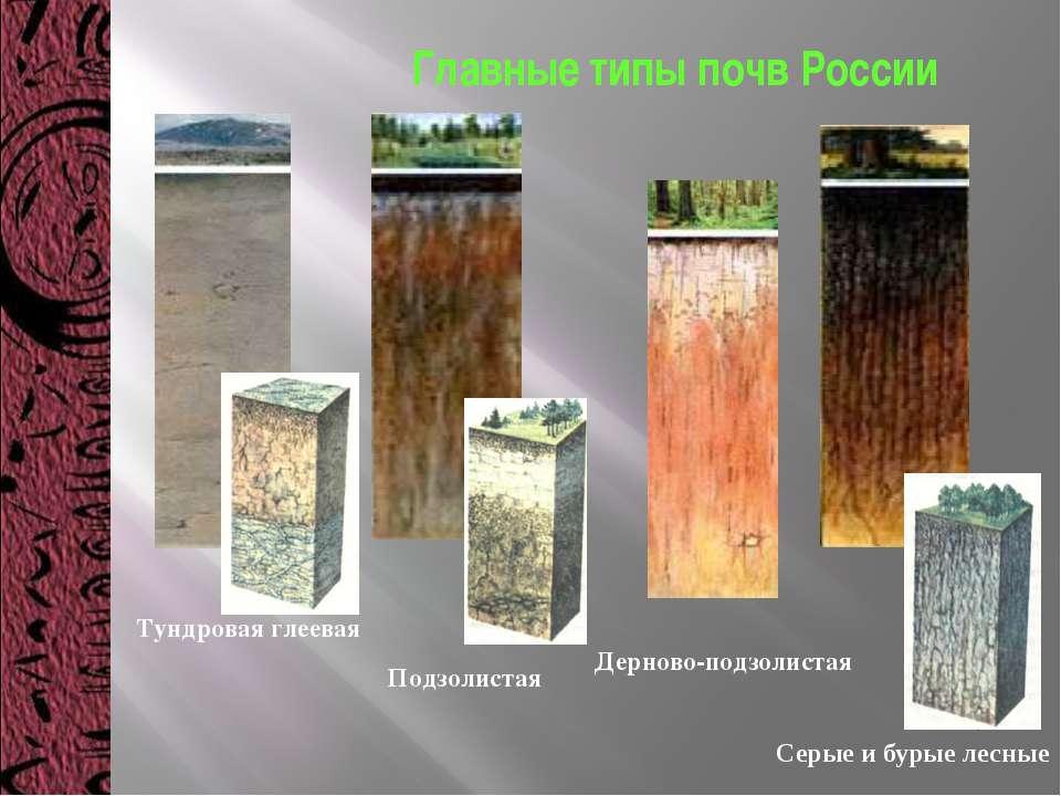 Тундровая глеевая Подзолистая Дерново-подзолистая Серые и бурые лесные Главны...