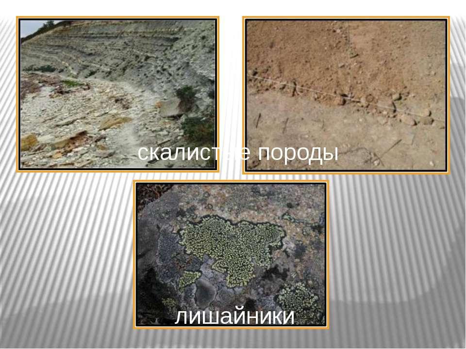 скалистые породы лишайники