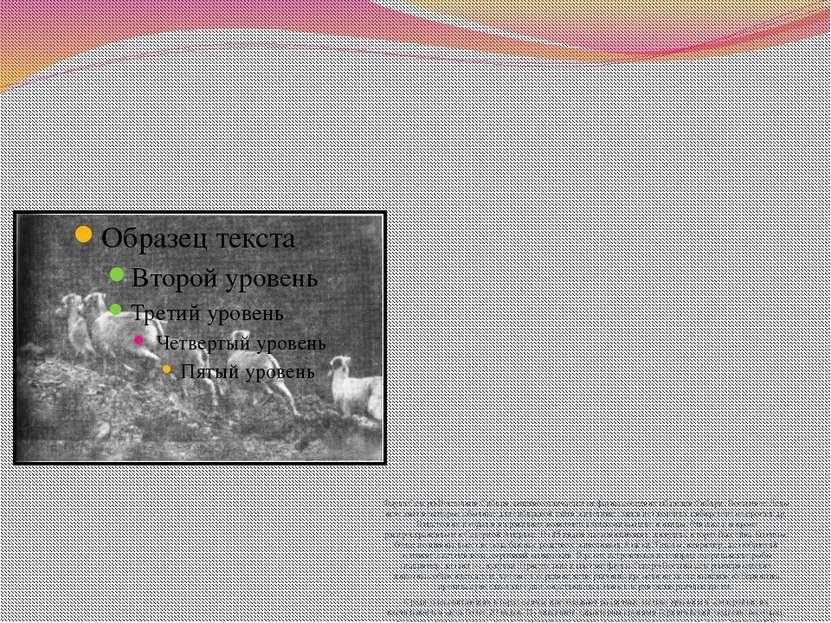 Фауна Северо-Восточной Сибири заметно отличается от фауны соседних областей С...