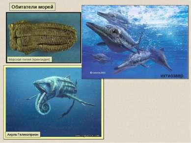 Акула Геликоприон Обитатели морей Морская лилия (криноидея) ихтиозавр