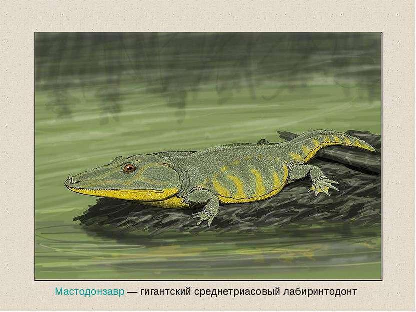 Мастодонзавр — гигантский среднетриасовый лабиринтодонт