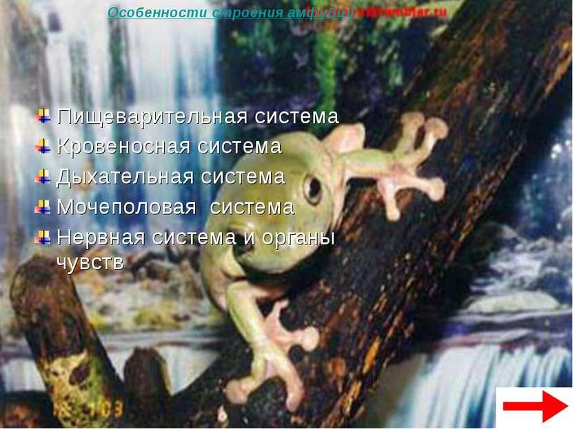 Пищеварительная система Кровеносная система Дыхательная система Мочеполовая с...
