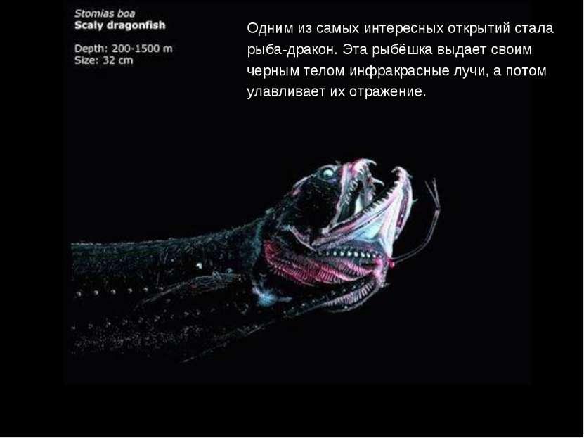 Одним из самых интересных открытий стала рыба-дракон. Эта рыбёшка выдает свои...