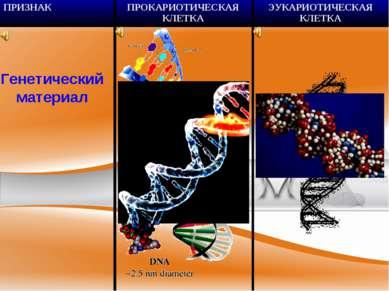 Генетический материал ПРИЗНАК ПРОКАРИОТИЧЕСКАЯ КЛЕТКА ЭУКАРИОТИЧЕСКАЯ КЛЕТКА