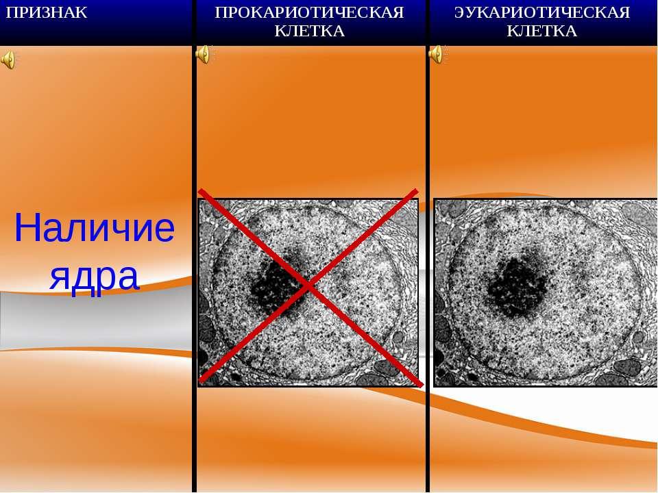 Наличие ядра ПРИЗНАК ПРОКАРИОТИЧЕСКАЯ КЛЕТКА ЭУКАРИОТИЧЕСКАЯ КЛЕТКА