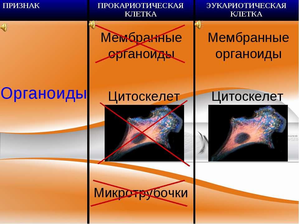 Органоиды Цитоскелет Микротрубочки Мембранные органоиды Цитоскелет Мембранные...