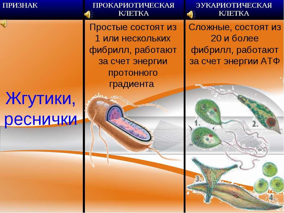 Жгутики, реснички Простые состоят из 1 или нескольких фибрилл, работают за сч...