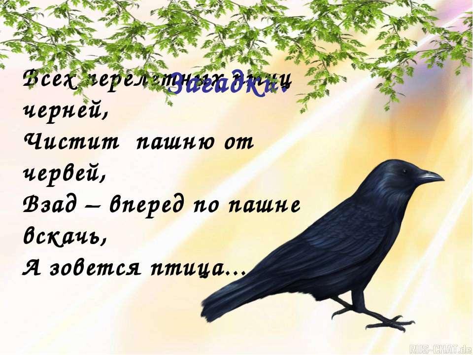 Всех перелетных птиц черней, Чистит пашню от червей, Взад – вперед по пашне в...