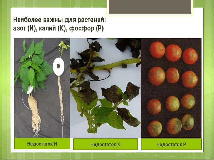 Наиболее важны для растений: азот (N), калий (К), фосфор (P)