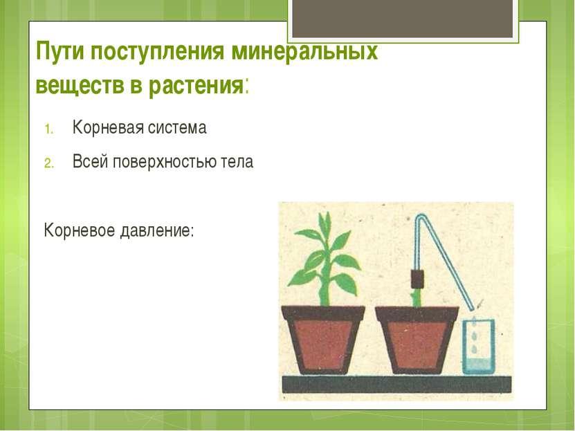 Пути поступления минеральных веществ в растения: Корневая система Всей поверх...