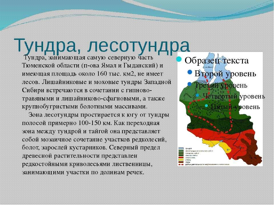 Тундра, лесотундра Тундра, занимающая самую северную часть Тюменской области ...