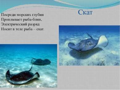 Посреди морских глубин Проплывает рыба-блин, Электрический разряд Носит в тел...