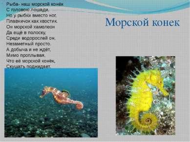 . Рыба- наш морской конёк С головою лошади, Но у рыбки вместо ног, Плавничок ...
