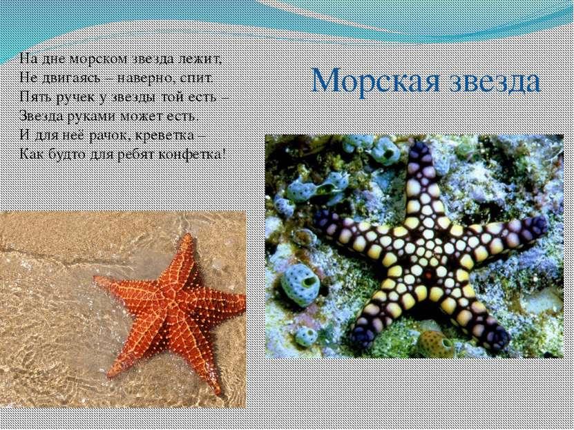 На дне морском звезда лежит, Не двигаясь – наверно, спит. Пять ручек у звезды...