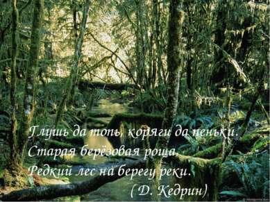 Глушь да топь, коряги да пеньки. Старая берёзовая роща, Редкий лес на берегу ...