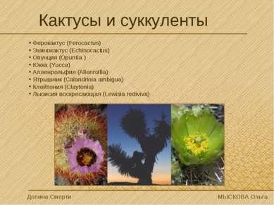 Кактусы и суккуленты Ферокактус (Ferocactus) Эхинокактус (Echinocactus) Опунц...