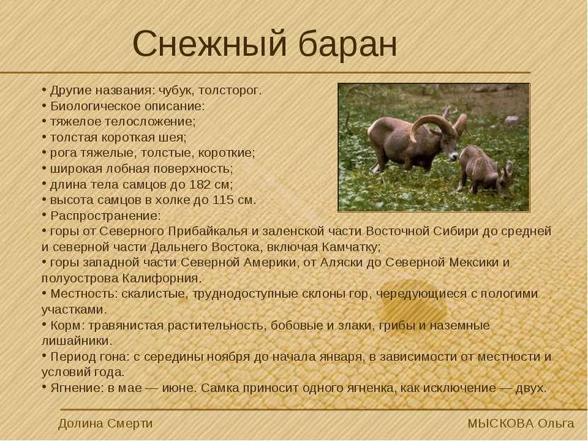 Снежный баран Долина Смерти МЫСКОВА Ольга Другие названия: чубук, толсторог. ...