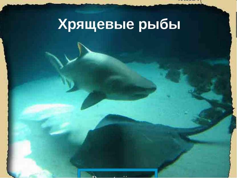 Хрящевые рыбы Prezentacii.com