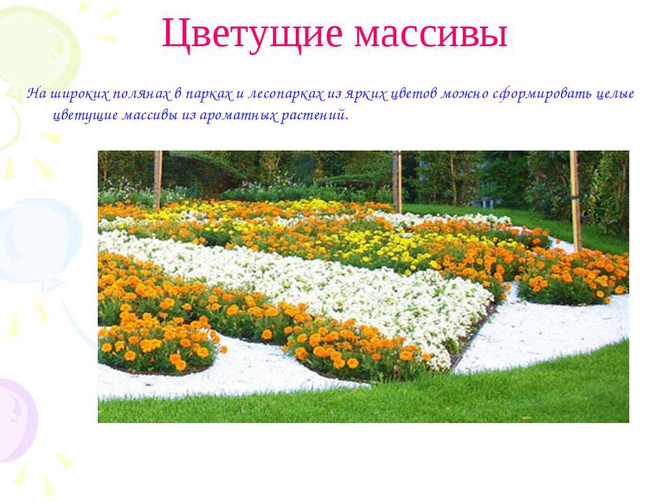 Цветущие массивы На широких полянах в парках и лесопарках из ярких цветов мож...