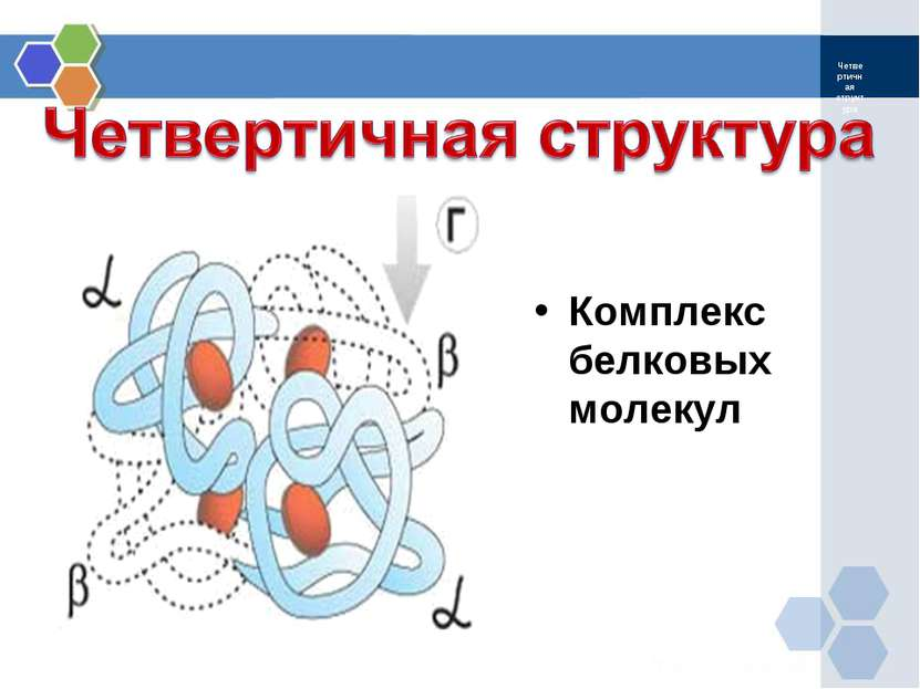 Четвертичная структура Комплекс белковых молекул