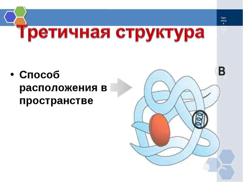 Третичная структура Способ расположения в пространстве