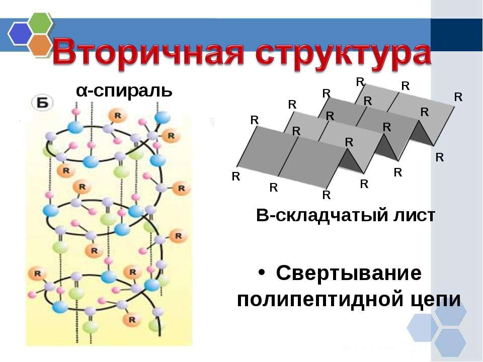 Вторичная структура α-спираль Β-складчатый лист R R R R R R R R R R R R R R R...