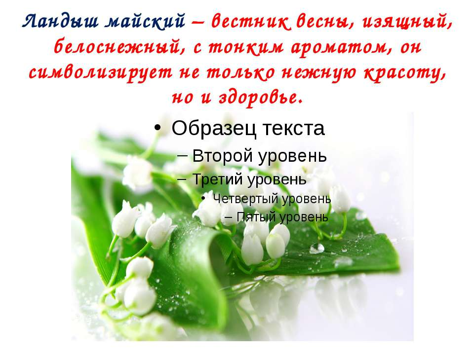 Ландыш майский – вестник весны, изящный, белоснежный, с тонким ароматом, он с...