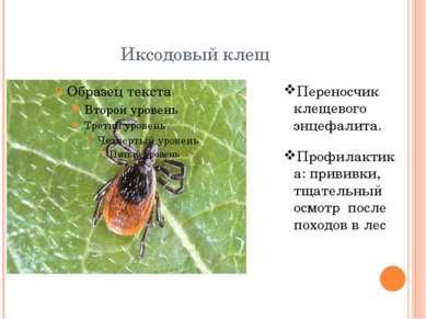 Иксодовый клещ Переносчик клещевого энцефалита. Профилактика: прививки, тщате...