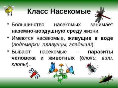 Внешнее строение насекомых На голове расположены сложные глаза, два длинных у...