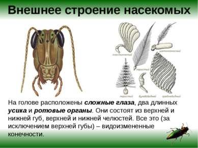 Внешнее строение насекомых У насекомых имеются различные типы ротовых аппарат...