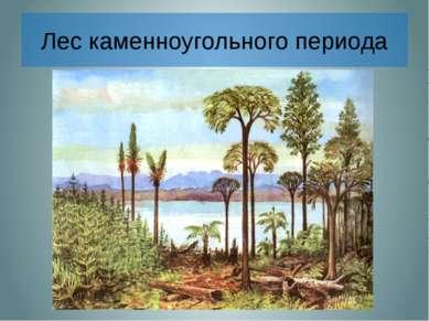 Лес каменноугольного периода В далекие-далекие времена, когда над Землей расс...