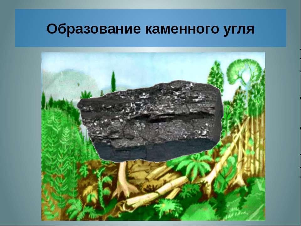 Образование каменного угля Отмершие древние папоротникообразные падали в воду...