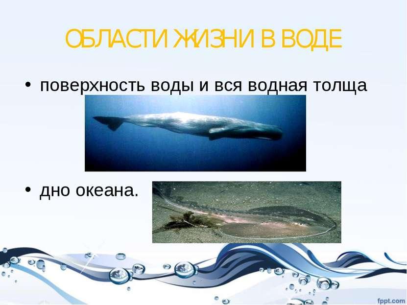 ОБЛАСТИ ЖИЗНИ В ВОДЕ поверхность воды и вся водная толща дно океана.