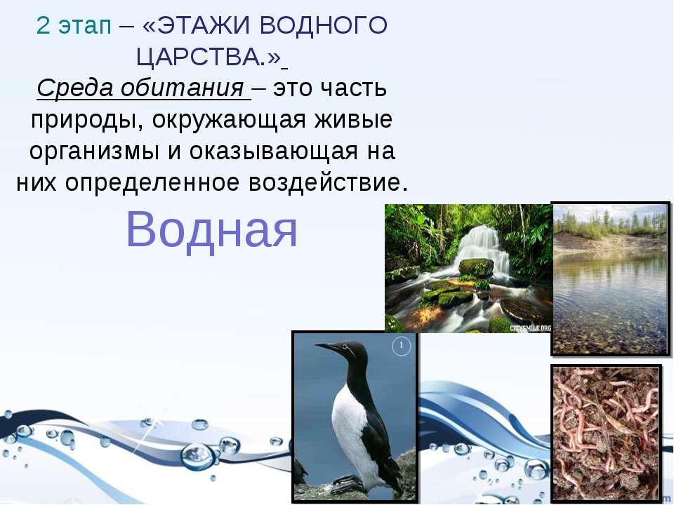2 этап – «ЭТАЖИ ВОДНОГО ЦАРСТВА.» Среда обитания –это часть природы, окружаю...