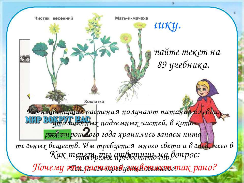 Работа по учебнику. Прочитайте текст на стр. 89 учебника. Раннецветущие расте...