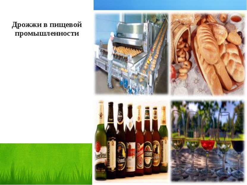 Дрожжи в пищевой промышленности