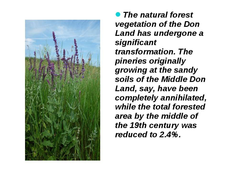 The natural forest vegetation of the Don Land has undergone a significant tra...