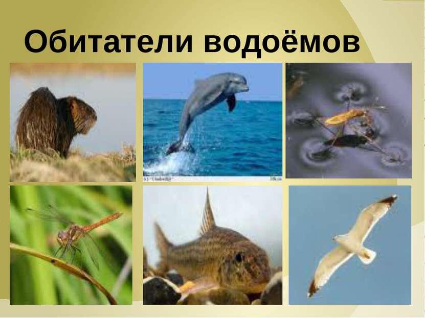 Обитатели водоёмов
